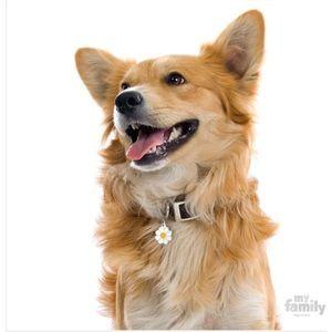 2pcs of My Family Daisy Dog ID Tags